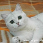 cora-dominika-peppercats.jpg
